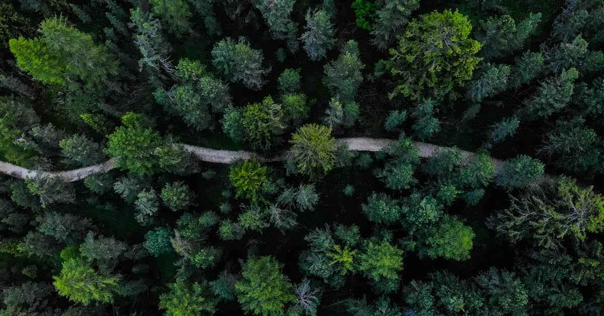 Investice do přírody je zase IN